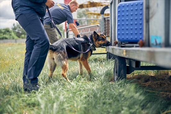 Security-Dog-NVC-Security