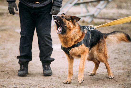 Security-Dog-NVC-Security-2