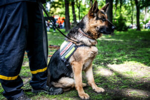 Security Dogs and Their Handlers